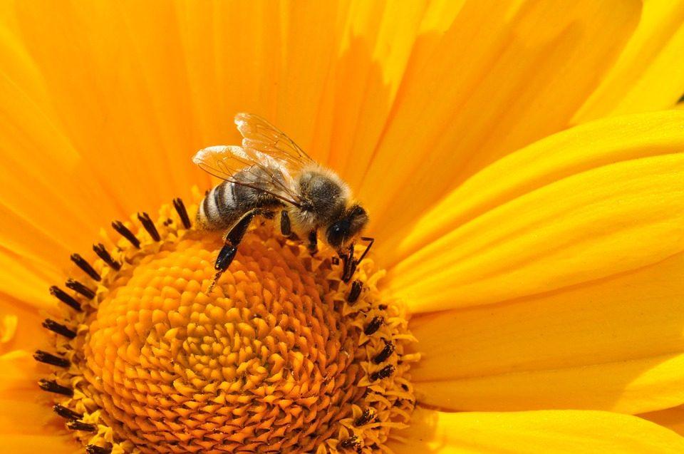 abejas bajo amenaza de agrotoxicos
